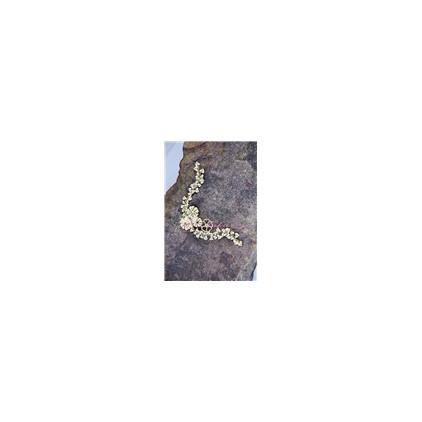Miszmasz Papierowy - Tekturka - narożnik roślinami