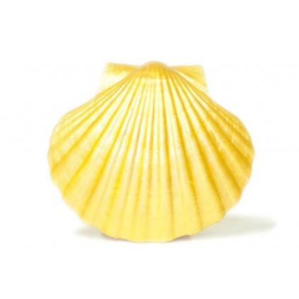 Farba perłowa - Daily Art - żółta - 50ml