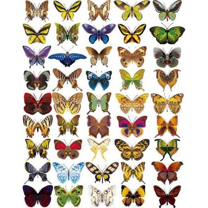 """Folia z nadrukiem, nakładka - Fabrika Decoru -""""Butterflies mini"""""""