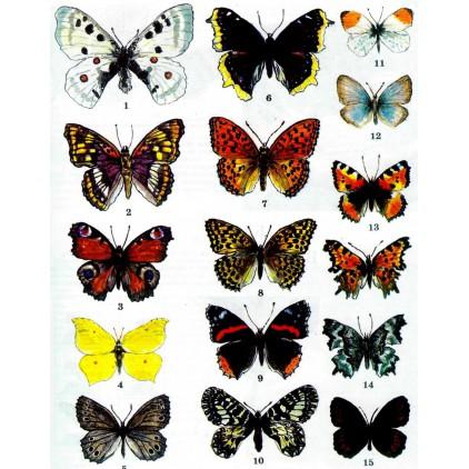 "Folia z nadrukiem, nakładka - Fabrika Decoru -""Colorful butterflies """