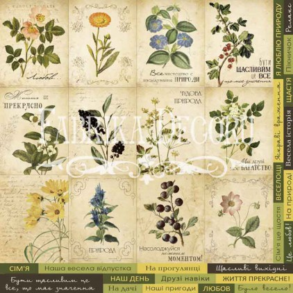 Scrapbooking paper - Fabrika Decoru - Botany Summer - Pictures for cutting 02