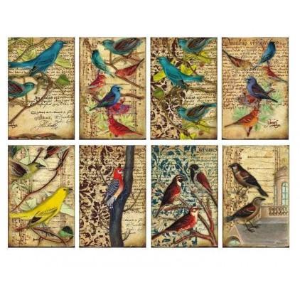 Decorer - Set of mini scrapbooking papers - Birds