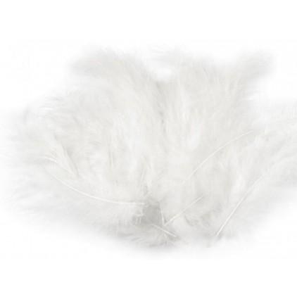 Strusie piórka - Białe