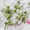 Ćwieki - Brokatowe - zielone