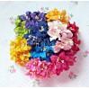 Zestaw papierowych lilii - miks 15 - 50 sztuk