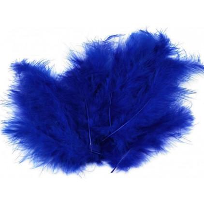 Strusie piórka - Niebieski królewski