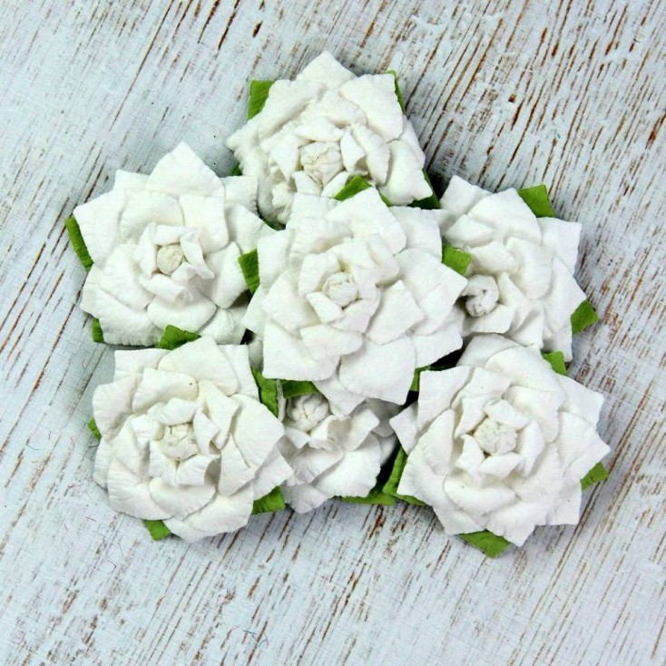 Paper flower set - Buck Rose White